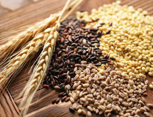 Registro di carico e scarico dei cereali: le associazioni di categoria scrivono al ministro Patuanelli