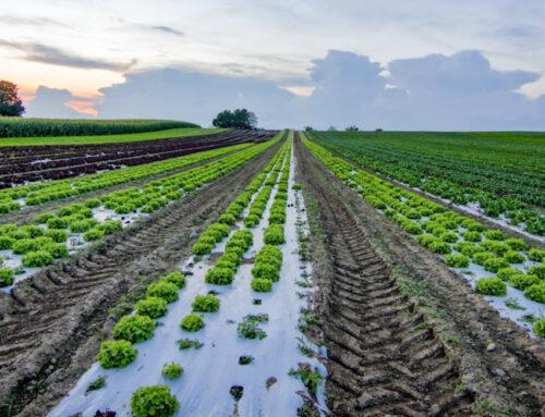 Farm to fork, l'appello delle cooperative alla Commissione