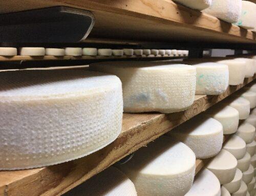 Il Covid fa salire le vendite di formaggi di montagna
