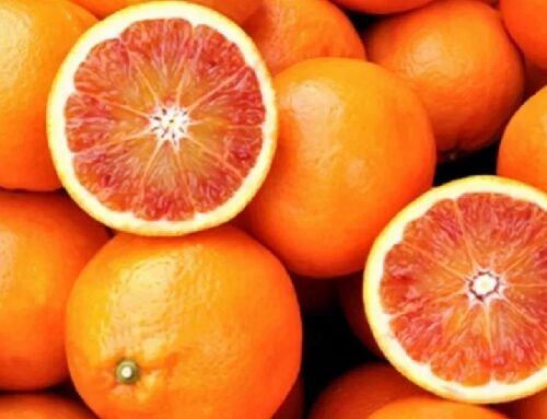 Arance da industria a 12 cent/chilo: i produttori chiedono l'intervento del Mipaaf