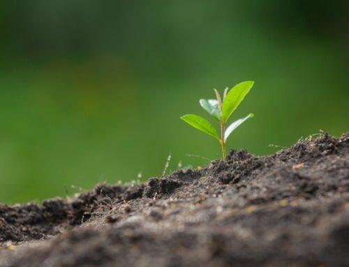 Agricoltura: approvata in Senato la nuova legge sul biologico