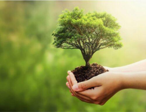 Agricoltura biologica: al via il bando di 4,2 mln di euro per progetti di ricerca