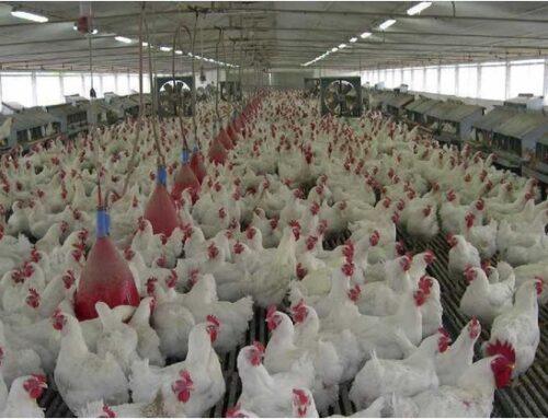 Influenza aviaria: dall'India alla Francia, dilaga un nuovo ceppo del virus