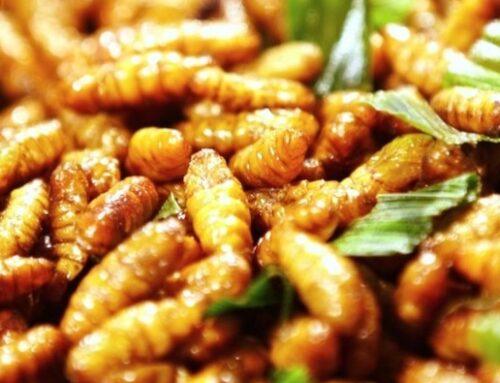 L'Efsa è pronta a dare il via libera agli insetti nel piatto