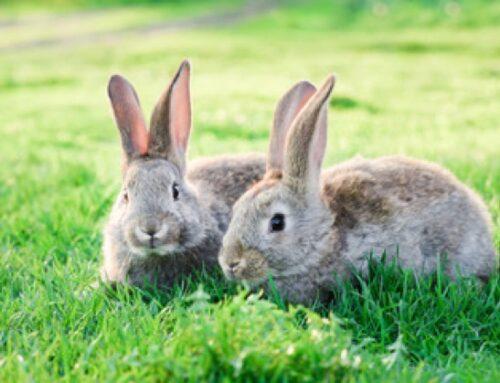 Tutela carne di coniglio: interrogazione alla Commissione Ue sull'obbligo di etichettatura