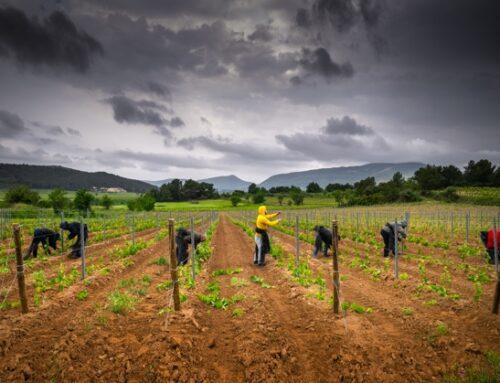 ELGi fornitore di aria compressa per i vini biologici di Château Ollieux Romanis