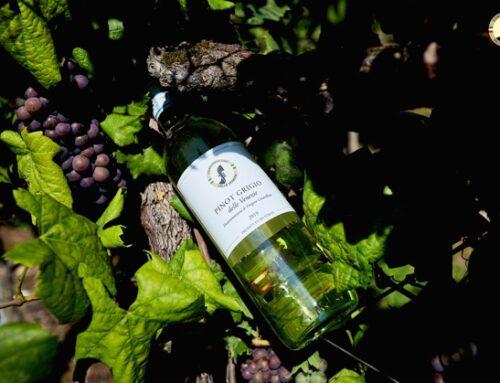 Pinot Grigio delle Venezie: +4,7% di imbottigliamenti nel 2020