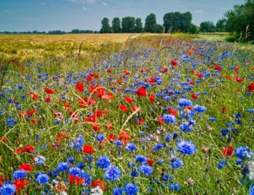 Sostenibilità: Lidl lavora al primo standard sulla biodiversità in agricoltura