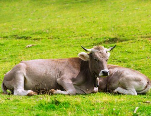 Inalca e Corteva Agriscience: al via la collaborazione per la sostenibilità degli allevamenti