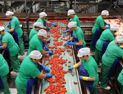 La guerra del pelato (2). La Puglia chiede la Dop per il pomodoro allungato