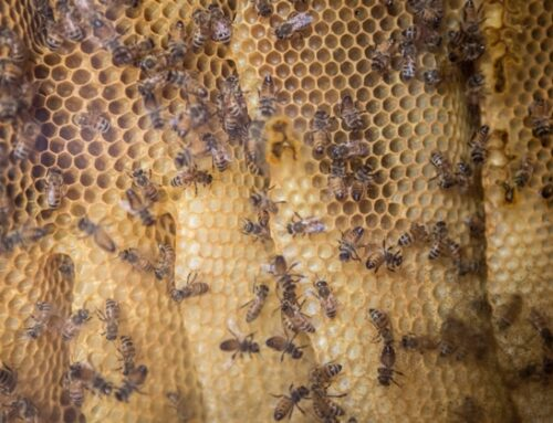 Coop: al via la campagna 'Ogni ape conta'
