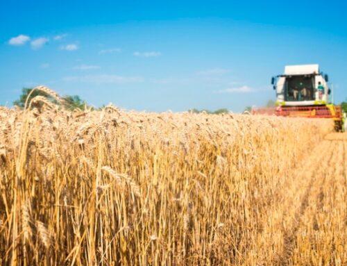 Calo del prezzo del grano in Puglia: a causarlo, secondo Cia, le importazioni massicce