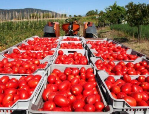 Maxi sequestro di pomodoro egiziano nel Salernitano: confiscate 821 tonnellate di semilavorato contaminato da pesticidi