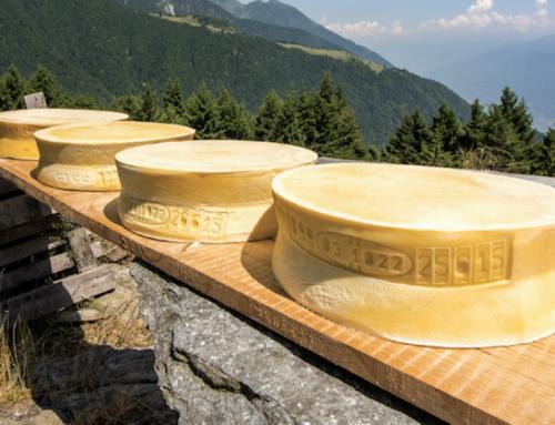 Al via il cammino del Valtellina Casera e del Bitto