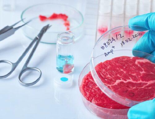 Leonardo Di Caprio investe nelle start up di carne sintetica