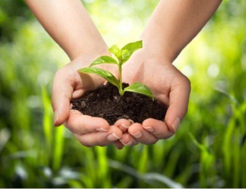 G20 Agricoltura: l'impegno è raggiungere la sicurezza alimentare puntando sull'agroecologia