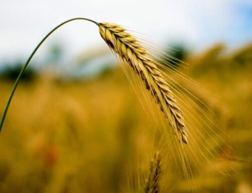 """Patuanelli: """"Preoccupa l'impennata dei prezzi del grano duro. Ritengo ci siano elementi speculativi"""""""