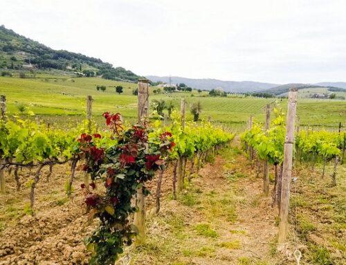 Il Brunello di Montalcino protagonista alla Milano Wine Week 2021