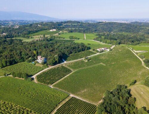 Perlage Winery, Altromercato e Germinal insieme per promuovere le filiere sostenibili